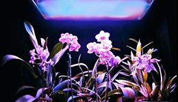 led horticole plante orchidée