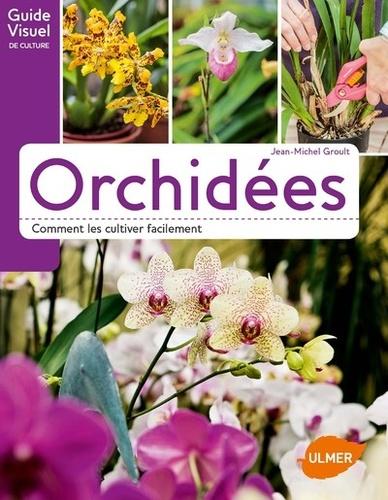 Orchidées – Comment les cultiver facilement