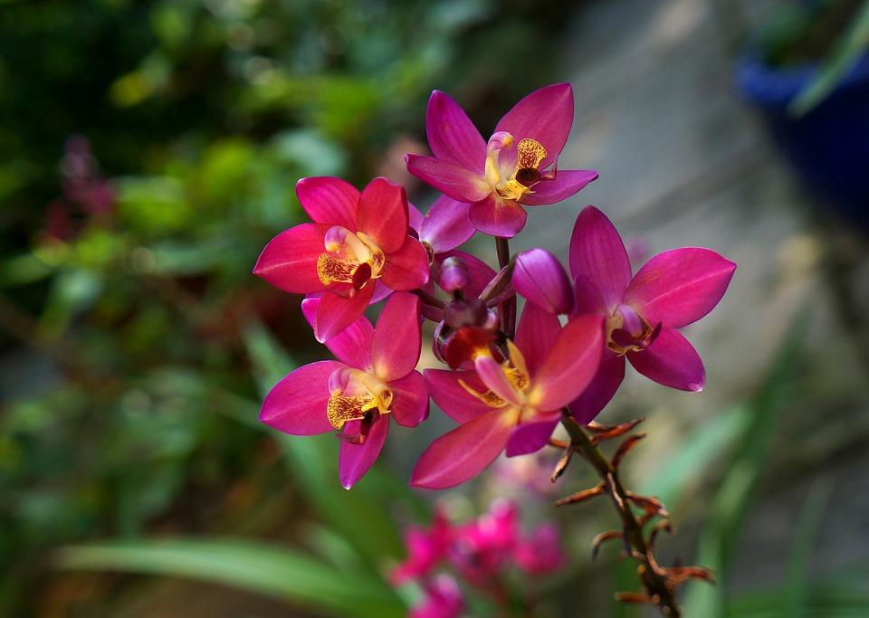 Aération des orchidées