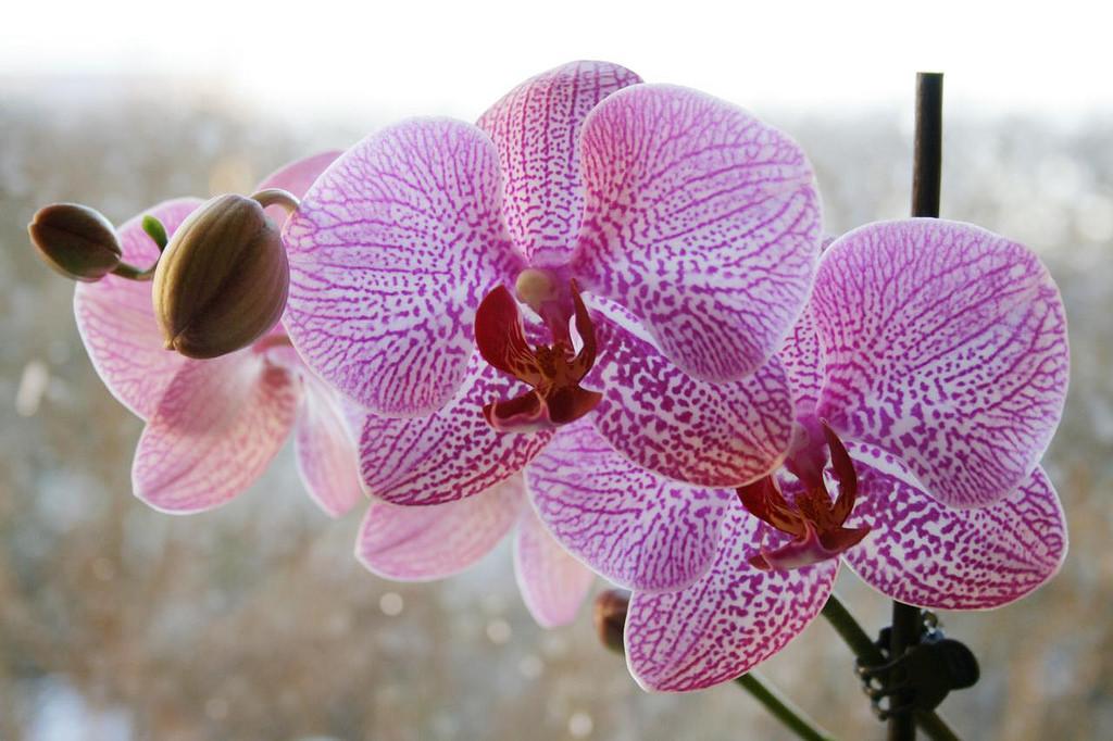 La lumière pour les Orchidées