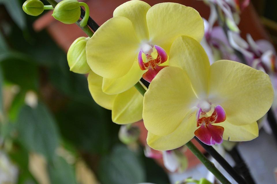 Taille de l'orchidée