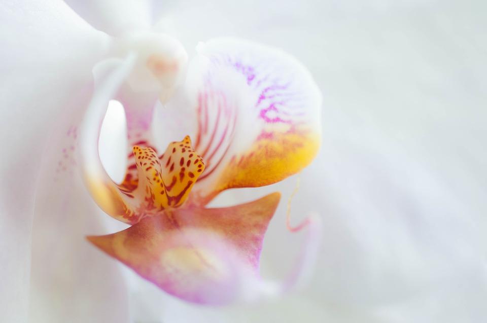 Quand dois-je rempoter mon orchidée ?